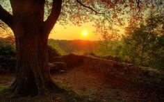 Rainy Fall Sunrise | Fondo Arbol con Sol de Fondo                                                                                                                                                                                 Más