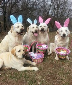 30 Pets Who Are Ready for Easter