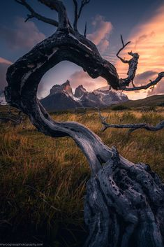 Natural framing in Torres del Paine National Park [OC] insta: photography pictures pictures images photos background wallpapers background National Photography, Nature Photography, Outdoor Photography, Torres Del Paine National Park, Wild Fire, Destinations, Travel Abroad, Landscape Photographers, Nature Photos