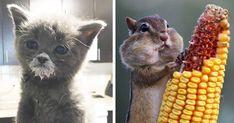 Képek, amelyek mosolyt csalnak az arcunkra: majszoló állatok