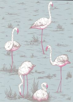 """Flamingos Wallpaper, Grey / Neon - Wallpaper is another way homeowners are showing their love for flamingos. Here, Cole & Son's """"Flamingos"""" wallpaper features gray background with neon pink flamingos. Flamingo Wallpaper, Grey Wallpaper, Print Wallpaper, Cloakroom Wallpaper, Eclectic Wallpaper, Bedroom Wallpaper, Feature Wallpaper, Luxury Wallpaper, Bird Wallpaper"""