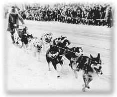 Iditarod Trail 1925: The Serum Run (Conclusion)
