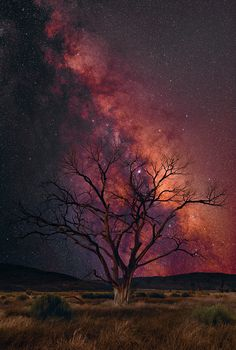 """Peter Lik's New Release - """"The Work."""" Amazing Photo ❤️  + Camera Nikon D800E + 36 Exposures f/2.8 @ 2 mins + Time 10:30P  The Milky Way is one of the most beautiful and mysterious places in the universe. In our day-to-day lives we almost never stop and think about this powerful mass of energy, light, and gravity - completely full of the unknown. To capture this magic, two camera types had to be used. This was a two-man job. My assistant Mark set up the astro camera."""