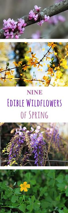 Add Edible wildflowers to your next meal for a splash of spring color and unique flavors. Here are 9 edible flowers that likely grow near you.