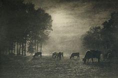 Die Viehweide hotographerLéonard Misonne CountryBelgium MediumPhotogravure JournalPhotographische Mitteilungen 1906 AtelierGeorg Büxenstein & Co. Year1906