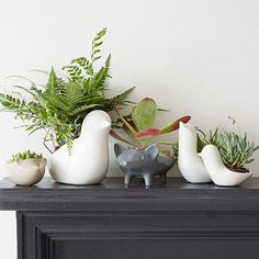 Ceramic Animal Planters #westelm