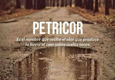 Olor a tierra y lluvia Rare Words, Weird Words, New Words, Cool Words, Spanish Words, Spanish Phrases, Spanish Language, Spanish Quotes, Charco
