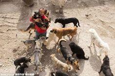Milionário usa fortuna para comprar matadouro e criar abrigo para salvar cães - ANDA - Agência de Notícias de Direitos Animais