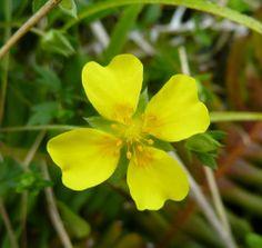 Arturo Larena @Arturo Larena 7 nov #Biodiversidad #botánica ibérica en la #rednatura2000 @LifeInfonatur http://www.efverde.com pic.twitter....