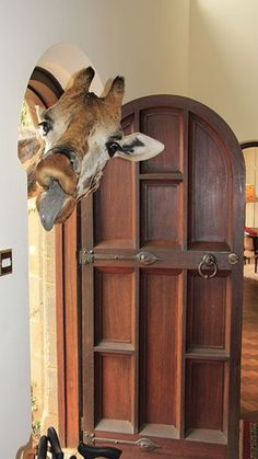 And finally. a rude intruder at a house in Namibia Michael Giele <ul> <li>The Big Picture: previous winners and how to enter </li> <li>The Big Picture: terms and conditions of entry </li> <li>More travel picture galleries </li> </ul> Giraffe Pictures, Funny Animal Pictures, Cute Pictures, Beautiful Creatures, Animals Beautiful, Animals And Pets, Baby Animals, Arte Fashion, Giraffe Art