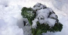 Do you know when to start planting for your winter garden? From Green Living Ideas