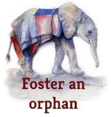 Foster an Elephant Orphan or Rhino Orphan through the David Sheldrick Wildlife Trust