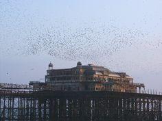 West Pier, Brighton. T.Irvin 2003