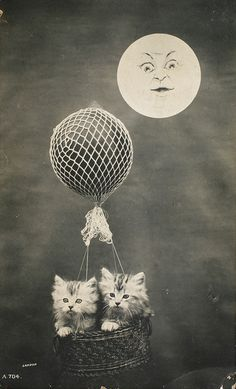 kattenkaarten112 by roger.laute, via Flickr Vintage Moon, Vintage Cat, Old Cats, Cats And Kittens, Crazy Cat Lady, Crazy Cats, Vintage Photographs, Vintage Photos, Vintage Postcards