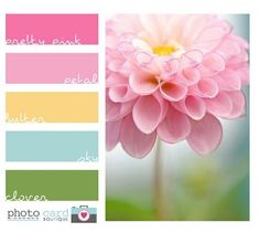 beautiful pink color scheme by nola