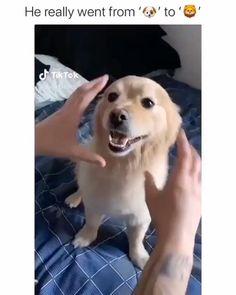 Animal Jokes, Funny Animal Memes, Dog Memes, Funny Animal Videos, Cute Funny Animals, Cute Baby Animals, Funny Cute, Funny Dogs, Animals And Pets