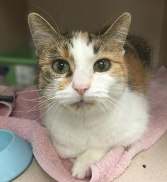 3/2018Tinkerbelle is an adoptable torbie searching for a forever family near Palatine, IL. Use Petfinder to find adoptable pets in your area.