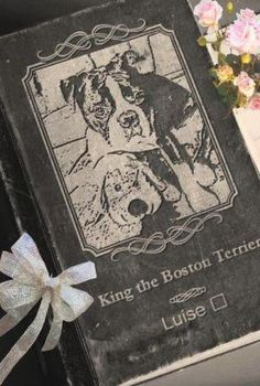 Emotional Rollercoaster, Boston Terrier Love, Old World, Stuff To Do, It Hurts, In This Moment, King