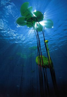 Find images and videos about photography, blue and water on We Heart It - the app to get lost in what you love. All Nature, Amazing Nature, Science Nature, Underwater Photography, Nature Photography, Fotografia Macro, Belle Photo, Under The Sea, Beautiful World
