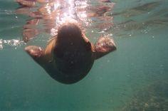Sea Lion in Baja!