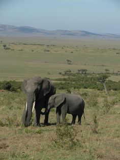 """See 22 photos and 6 tips from 146 visitors to Amboseli Sopa Lodge. """"One of the best restaurants and buffet that we have found in one week of safari. All About Elephants, Elephants Never Forget, Save The Elephants, African Elephant, African Animals, African Safari, Elephants Photos, Elephant Sanctuary, Big Animals"""