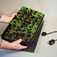 Photo of Heat Mat Kwik Grow 1 Tray