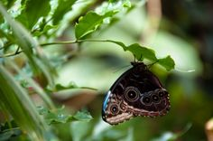 """Buy the royalty-free Stock image """"Close-up of a beautiful colourful butterfly against plant background"""" online ✓ All image rights included ✓ High resolu. Plant Background, Background Images, Relaxing Places, Closer To Nature, The Real World, Real People, Oasis, Close Up, Butterfly"""