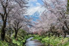 I will be leaving to Japan to shoot the cherry blossoms in Izu. Please forgive me for being absent in the following week. See you very soon. 明天要出發,前往日本伊豆追河津櫻去啦!希望一切平安順利,河津地區的櫻花,比往年提早一週綻放,希望我去時,還有櫻花可拍。 〜お宮橋, 忍野村, 山梨県, 日本 Oshino Village, Yamanashi County, Japan - ISO 100, F16, 1/30 sec, 70 mm - Canon 5D MarkIII with EF 70-200mm f/4 L lens - Sunrise @ 5.24am (74º) / Shot @ 9.47am - Visibility 20km @ 10.00am/ Humidity 39% @10.00am - Temperature 17ºC @ 10.00am https://www.picturedashboard.com