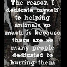 HELP. Stop hurting animals. #vegan #AnimalRights #activist