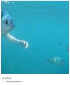 48 Times Tumblr Was Funny About Animals THIS FREAKING POST THO IT GOT ME IN TROUBLE IN CLASS