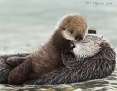 My Mother's day card to my folks. A newborn sea otter pup tenderly hugs mom. Please enjoy this little scene of this sweet endangered family. Thanks, Blair Sea Otter Pup hugs Mom, Nom your Mom Baby Otters, Cute Baby Animals, Animals And Pets, Funny Animals, Realistic Animal Drawings, Otter Pup, Otter Love, Bulldog, My Animal