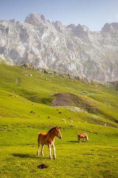 Picos de Europa (4)