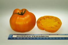 Russian Persimon heirloom tomato, grown at Rutgers NJAES research farms.
