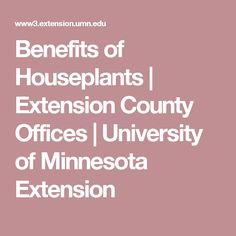 Benefits of Houseplants | Extension County Offices | University of Minnesota Extension