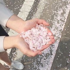 【kumadesune】さんのInstagramをピンしています。 《 #japan #japanese #pastel #tumblr #korea #korean #asian #kawaii #cute #aesthetic #sakura #cherryblossoms #petals》