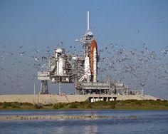 975 отметок «Нравится», 4 комментариев — Australian Students Space Org. (@australianstudentspaceorg) в Instagram: «A flock of birds take flight shortly after the Space Shuttle Atlantis arrives at Pad 39B after…»