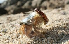 Seeing this little hermit crab using the neck of a broken bottle for his shell makes me both sad and happy at the same time. Sad because of the littering and pollution, but happy that little crab made something good from it. Broken Bottle, Broken Glass, Fauna Marina, What's New Pussycat, They See Me Rollin, Paludarium, Mundo Animal, Science And Nature, Sea Creatures