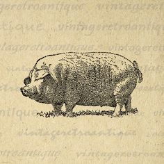 Big Pig Printable Image Graphic by VintageRetroAntique on Etsy