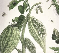 Retiro Linen Fabric A wonderful exotic design of finely drawn fruit and insects in greens on an off white background