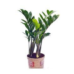 sip1_z_plant_jp2_w1_.jpg (1200×1200)