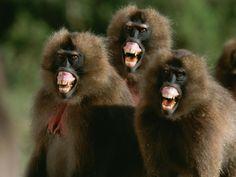 primates - Google Search