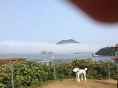 Isabella does Tofino. Poodles, Mountains, Nature, Travel, Naturaleza, Viajes, Standard Poodles, Poodle, Destinations