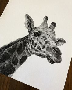 Animal Stippling and Cross Hatching BW Drawings. Click the image to see more of Gaspar's work.