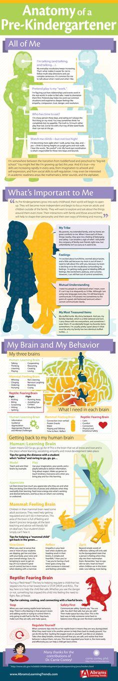 Anatomy Infographic | Pre-Kindergarten | PreK Infographic | How Prek Kids Think + Feel | Prek Feelings | Social +Emotional Behavior | Elementary + Preschool