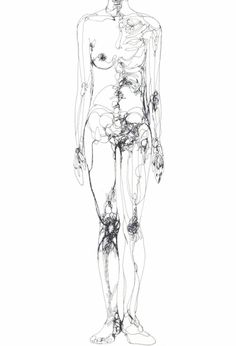 Anatomical Sketch of Female Body.