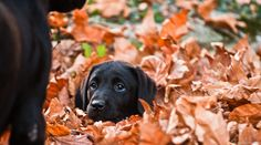 Puppies love the fall!