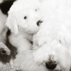 Bernadette with Opie the Old English Sheepdog