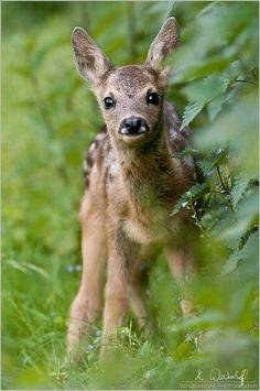 Baby deer. So cute.