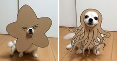 Japanese Woman Creates Hilarious Cardboard Cutouts With Her Dog (10+ Pics) https://plus.google.com/+KevinGreenFixedOpsGenius/posts/FERm18Y41JM