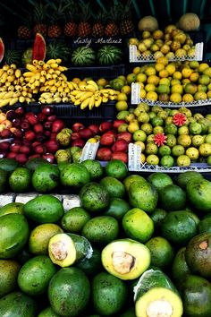 mangos, guayabas, sandias, aguacates , bananas and more